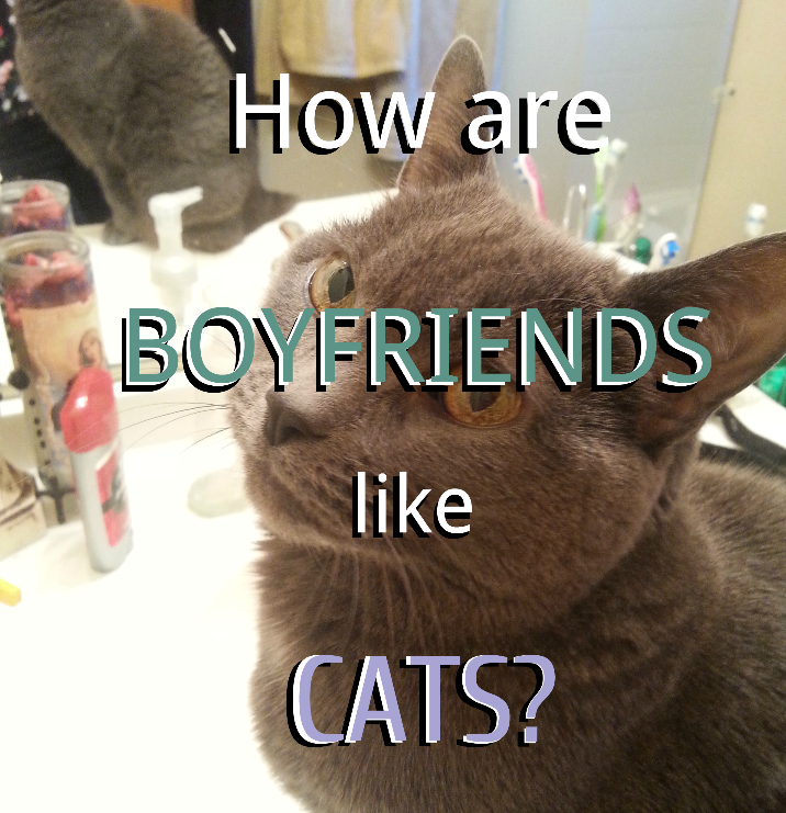 How+are+boyfriends+like+cats%3F