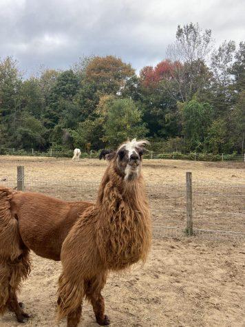 Fellinlove Farm: The power of animals